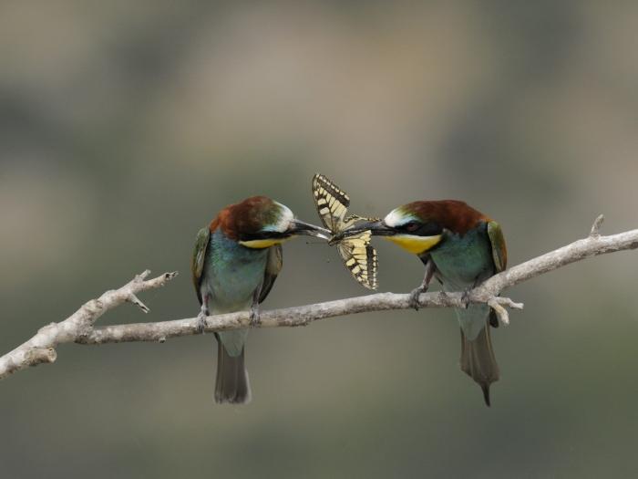 passarinhos romanticos