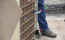 Aves passaram por reabilitação antes de serem liberadas Foto: Rafael Souza/ CPRH