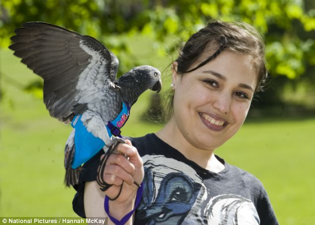 Papagaio herói luta com o agressor de sua dona em parque de Londres