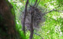 ninho de corvo com cabides Kenedy